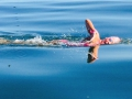 Carina Bruwer swims Robben Island 2014