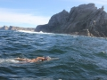 Carina rounds Cape Point in her solo Swim for Hope 2013